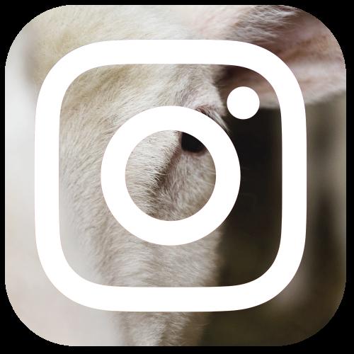 Schau doch mal auf Instagram vorbei